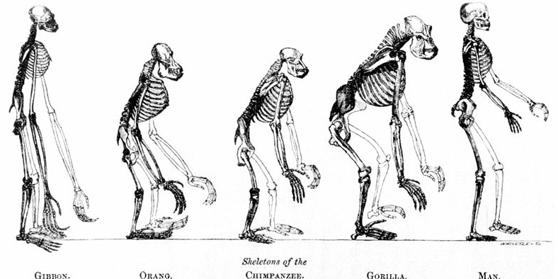 A Summary of Theistic Evolution