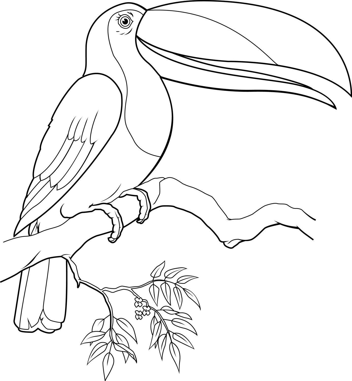 Keel Billed Toucan Drawing