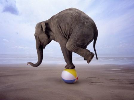 elefant_strandlabda_cirkusz_mutatvany