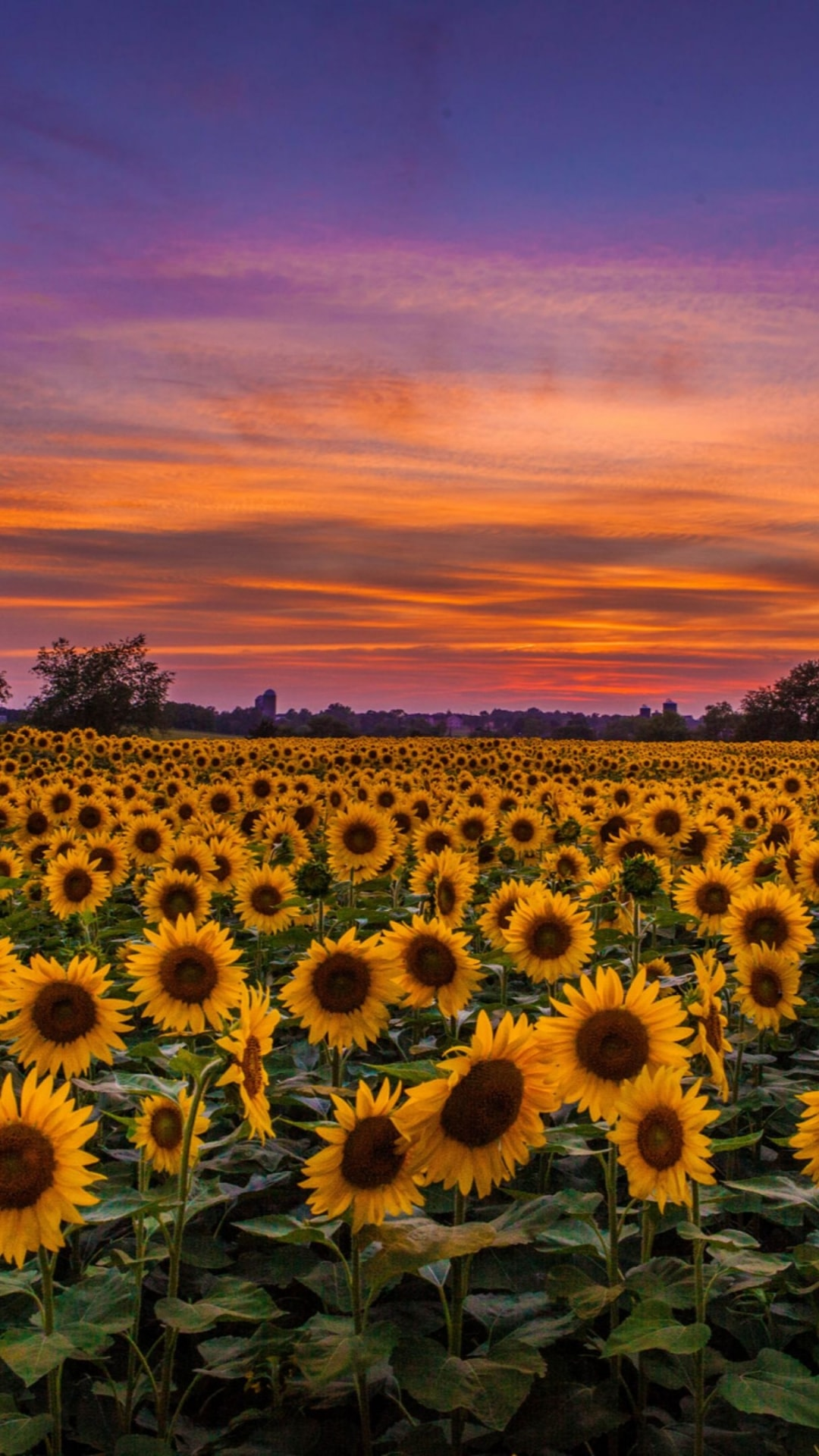 The ability to customize your display to. Iphone Sunflower Wallpaper - KoLPaPer - Awesome Free HD
