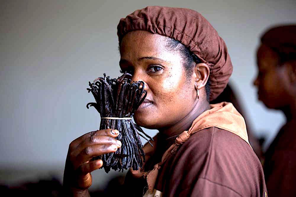 Vanilla Industry, Vanilla Madagascar, KOLUMN Magazine, KOLUMN