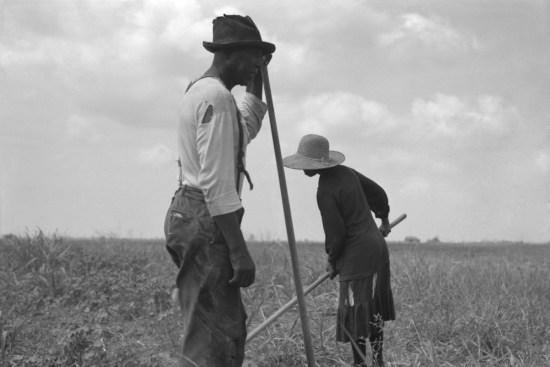 African American Farmers, Black Farmers, African American History, Black History, KOLUMN Magazine, KOLUMN, KINDR'D Magazine, KINDR'D, Willoughby Avenue, WRIIT, Wriit,