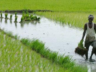 agriculture-india