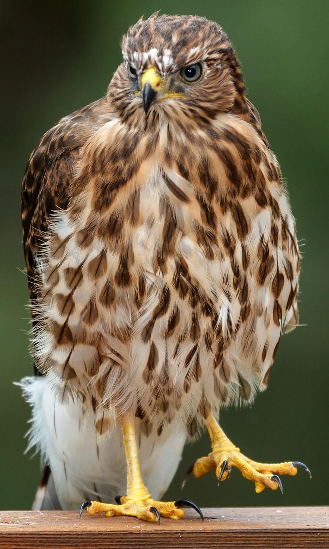 Colorado Cooper S Hawk Wow
