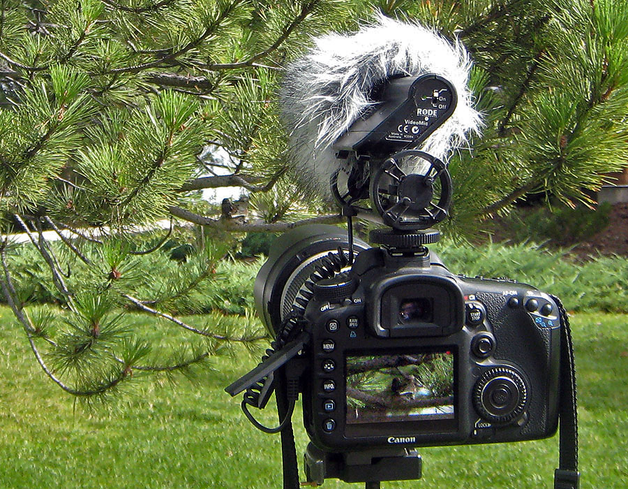 hummingbird nest camera setup 3