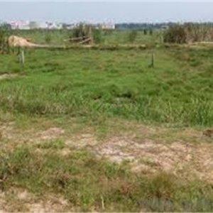 Plots Of Land For Sale In Lekki Nigeria