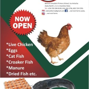 Buy Live Chicken And Fish At Awka