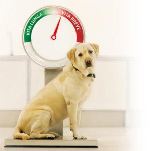 cane-in-sovrappeso
