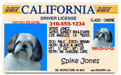 Fake Driver's License