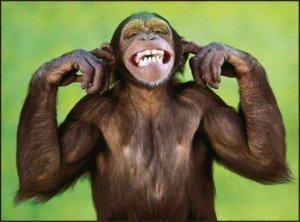 singe qui rigole