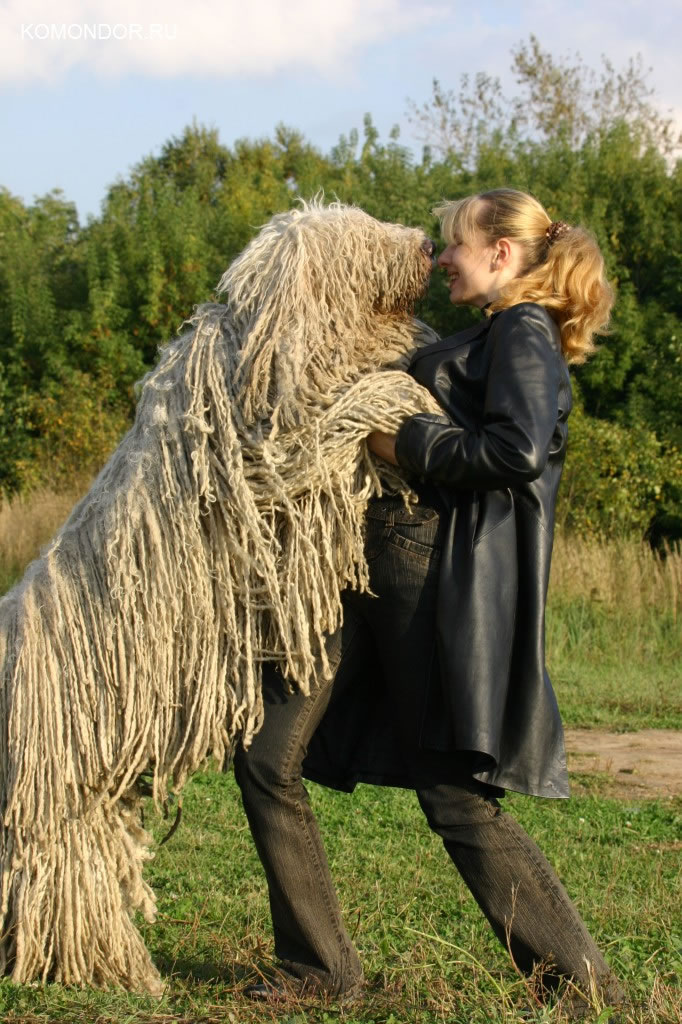 Cute Wallpaper Komondor Ru Венгерская овчарка комондор