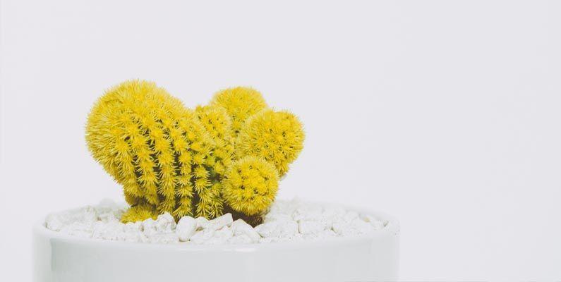 cactus sin nómina