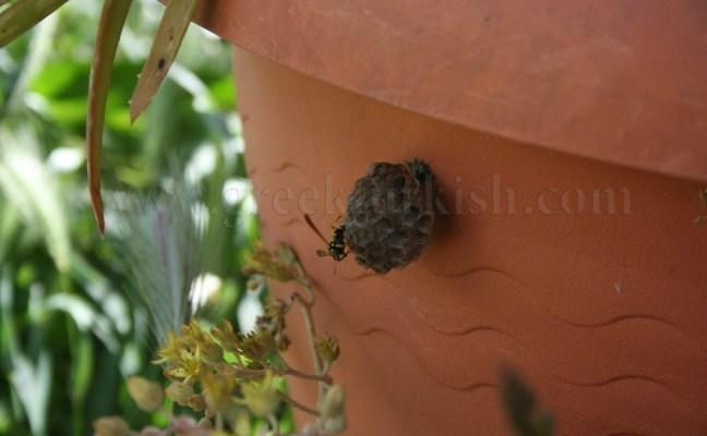 Kelebeğin kanadı, arının vızıltısı