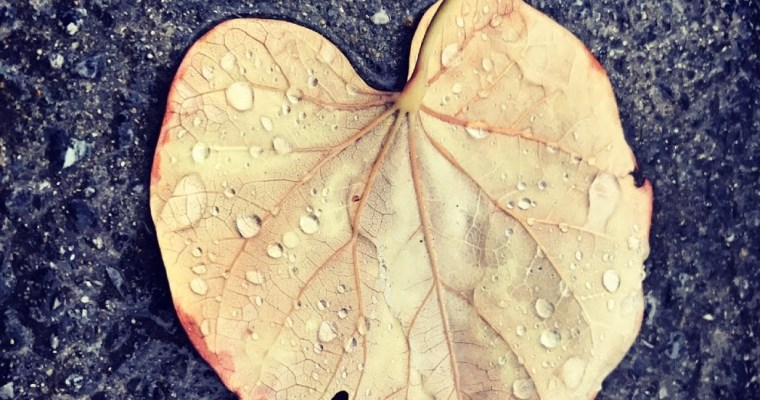 Yaprak neden düşer?