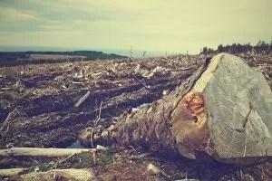 zniszczenia lasów