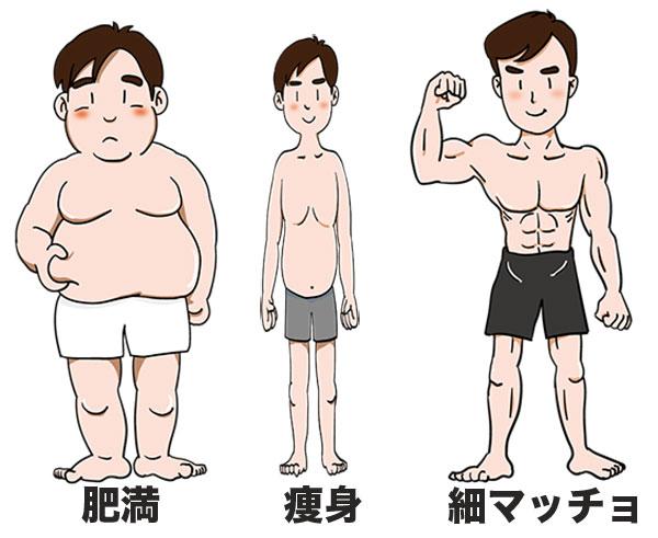 3つの体型