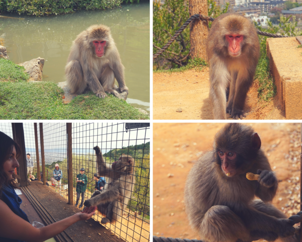 The Budget Traveller's Guide to One Week in Kyoto - Arashiyama Monkey Park
