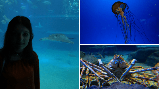The Budget Traveller's Guide to One Week in Osaka - Osaka Kaiyu Aquarium