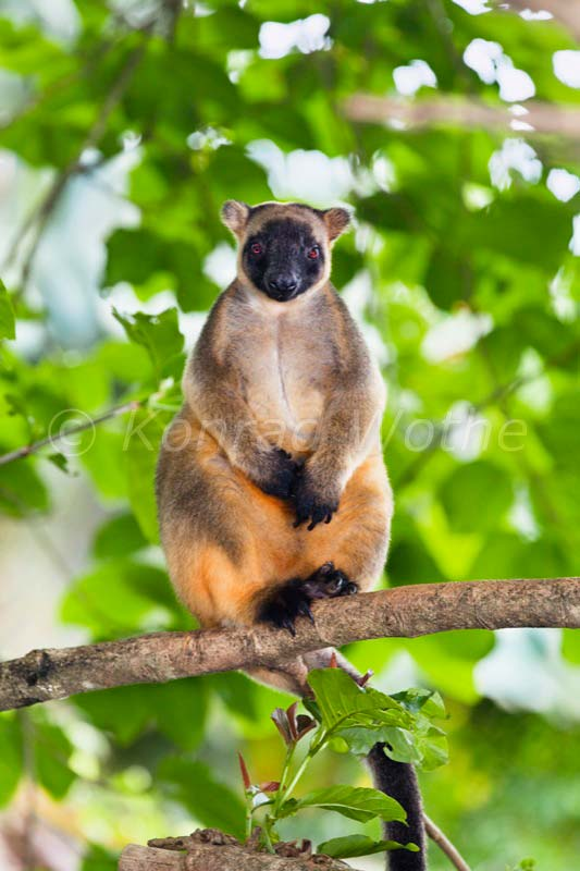 Australia  moments of nature  Konrad Wothe