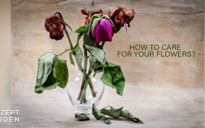 5 Ways To Care For Your Flowers?