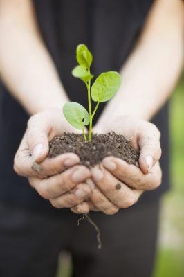 Hands Holding Seedleng by adamr