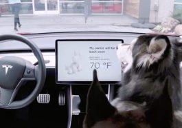 Tesla'dan Dört Ayaklı Dostlarımız için Yenilik: Köpek Modu