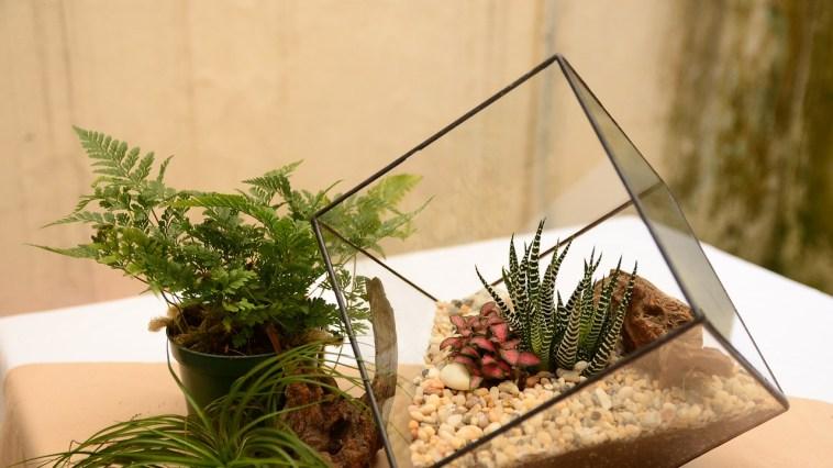 Yaşam Alanlarımızın Minyatür Bahçeleri Teraryumlar ve Teraryum Yapımı Hakkında Bilmeniz Gerekenler