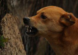 Hayvan Haklarını Savunmak Zorunda Mıyız?