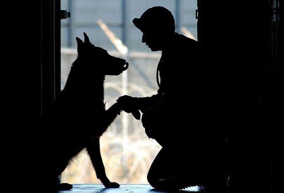 Başarılarıyla Kıskandıran Emektar 5 Köpek