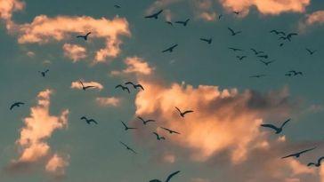 Bütün Bulutlar Bizim