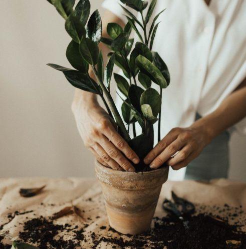 Balkonda Sebze, Meyve ve Çiçek Nasıl Yetiştirilir?