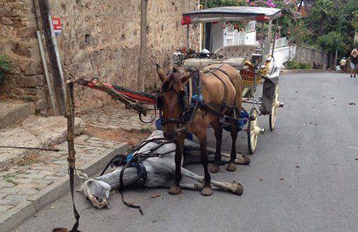 Kölelik, Hastalık, Ölüm: Büyükada'daki Atlar Vebaya Yakalandı