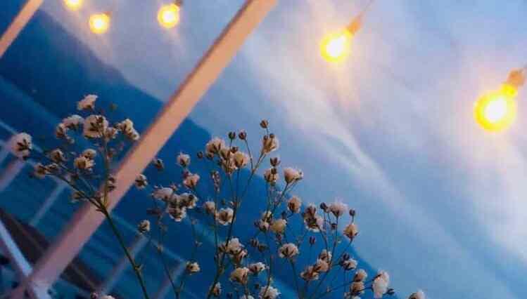 ışıklar altında çiçek ve doga manzarası