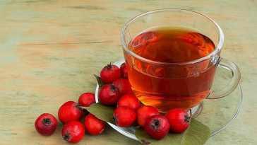 alıç faydaları ve alıç çayı nasıl yapılır