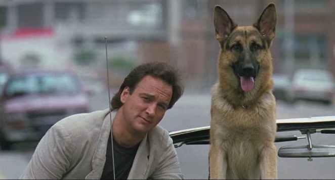 wendylucy Gelmiş Geçmiş En Popüler K9 Köpek Filmleri