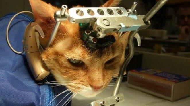 Sadece Hayvanseverlerin Anlayabileceği 10 İçten Duygu