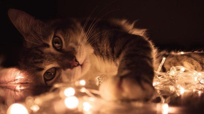 Evcil Hayvanınıza Eş Ararken Bakabileceğiniz 3 İnternet Sitesi