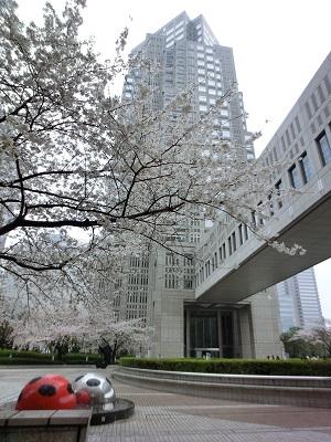 都庁第2本庁舎をバックに桜