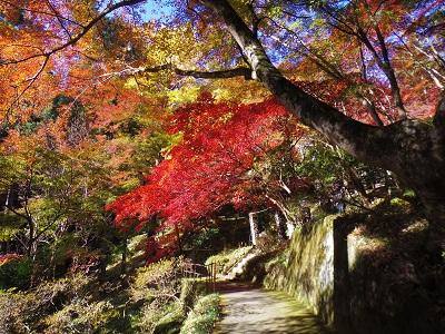 紅葉と黄葉、それに常緑が加わって見事なコントラストに