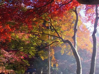 紅葉・黄葉・常緑の混ざった絶妙なコントラスト