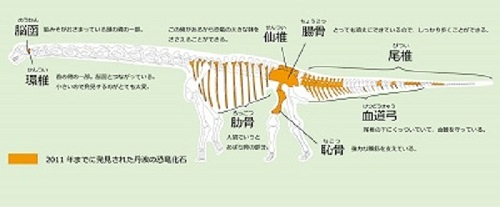 恐竜化石の想像図(兵庫県立人と自然の博物館HP)