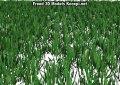 Grass 3D Model