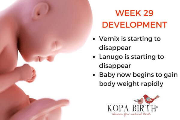 week 29 pregnancy baby development