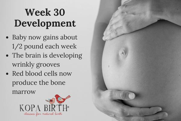 week 30 pregnancy development