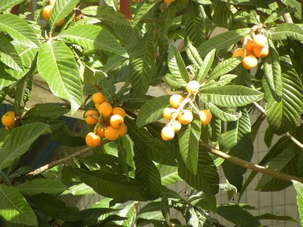 Μουσμουλιά με φρούτα εικόνα