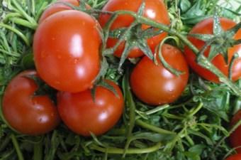 ντομάτες εικόνα