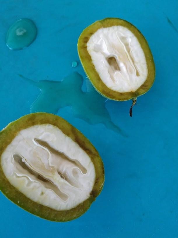 Tender green walnuts image