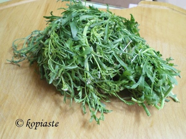 watercress kardamon Nasturtium officinale image