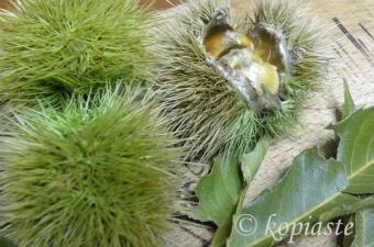 chestnuts on the tree image