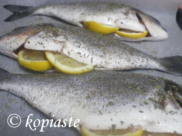 Tsipoura (Gilt-head bream)